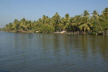Cocotiers et filets de pêche traditionnelle Backwaters Inde