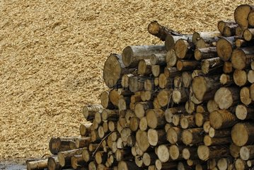 Stock of logs for the manufacture of paper pulp certified
