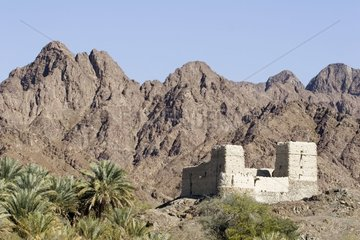 Palm trees and fort built against mountains Oman