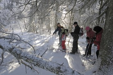 Walkers with snowshoes in a Beech forest France
