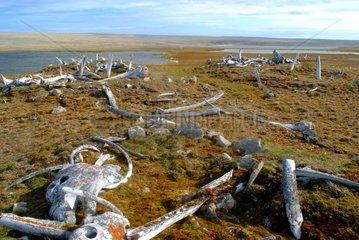 Ruins of Paleo-Eskimo houses Bathurst Island Canada