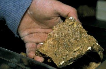 Cloportes cavernicoles dépourvus de pigmentation Moulis