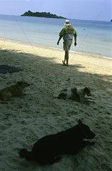 Dogs at rest on the beach of Ko Chang island Thaïland