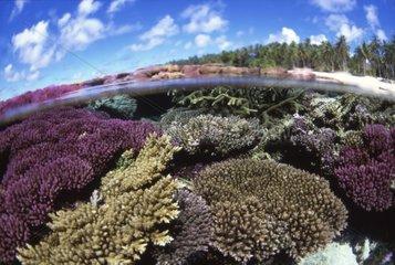 Récif corallien Iles Marshall Majuro Atoll