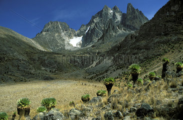 mount Kenya