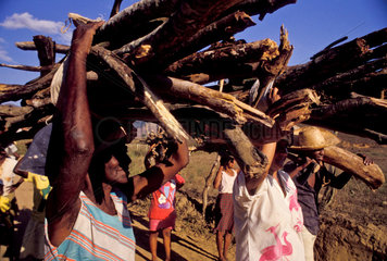 Poor people from countryside Brazil use firewood as main source of energy for cooking and heating.