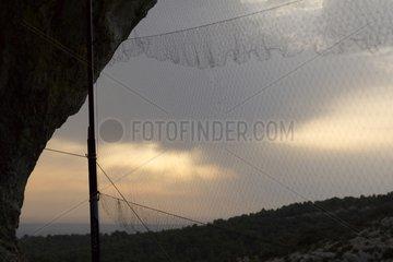 Nets for Bat catching Monts de Vaucluse