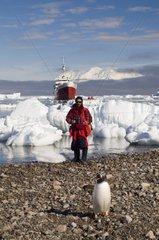 Man and Penguin Gerlache Strait Antarctic Peninsula