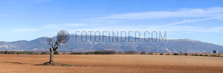 Plateau de Valensole en hiver Provence France