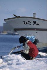Whooper swan Hokkaïdo Japon