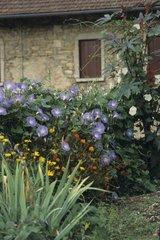 Flowers in a corner of garden
