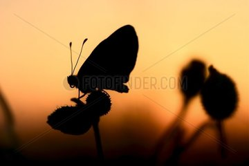 Butterfly in back-light posed on a flower in spring