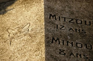 Stele commemorative of cats Cemetery of Asnière France