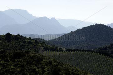 Haute Corbieres  departement Pyrenees Orientales