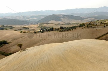 Agricultural landscape in Tuscany Italy