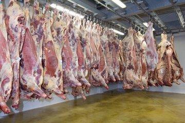 Carcasses de bovins en chambre froide