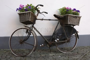 Former bicycle with baskets of flowers in summer Netherlands