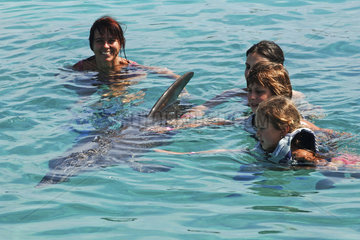 Netherlands Antilles  Curacao  a family is swimming with dolphins at the Dolphin academy