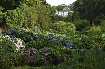 Cornwall  Mawnan Smith  Trebah botanical Garden  a sub-tropical ravine garden.