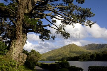 Seen from the abbey of Kylemore in Ireland