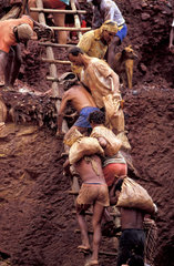 Gold seekers climbing precarious ladder  Amazon rainforest  Brazil. Dangerous conditions of work  no safety gears  unstable  insecure  danger  tough labor  hard labor  unhealthy labor  workers  poverty  unemployment  dangerous labor  dangerous work