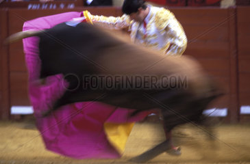 Bullfighter and bull in the arena