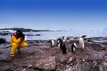 Tourist photographing Gentoo Penguin in Port Lockway in Antarctica Peninsula wildlife birds