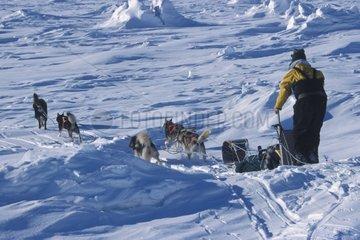 Attelage de Siberian Husky et musher Canada