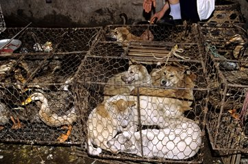 Animals sold for food in China