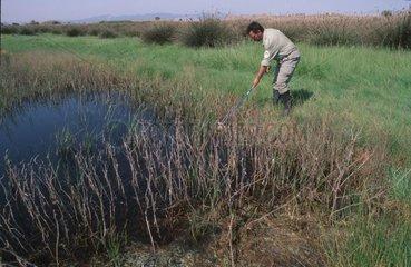 Aquatical entomologist working Spain