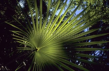 Tropical Vegetation in Kakadu National Park Australia