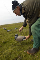 Terschelling  scientist from Alterra with a dummy Brent goose to capture other Geese into the nets