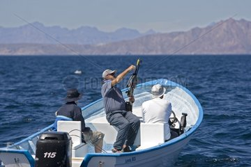 Scientist and Blue Whale Sea of Cortez Mexico