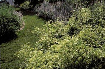 Egopode podagraire Variegatum au jardin de l'Evêché