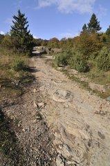 Footprints of Sauropod Dinosaurs in mudstone France
