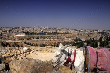 Donkey on mountain overlooking the historical important city of Jerusalem Israel