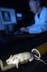 The Hubrecht Institue performing research in the field of developmental biology and stem cell research. A mouse is being scanned in a MR Magnetic Resonance scanner.