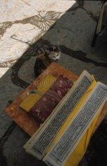 Chat de gouttière assis devant des drapeaux de prièreTibet