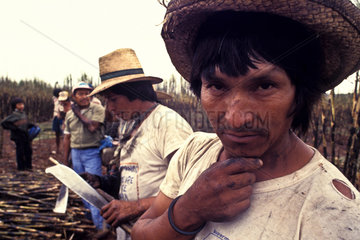 Biofuel production  Guarani indigenous people working as sugarcane cutters  methanol plant  Navirai city  Mato Grosso do Sul State  Brazil.
