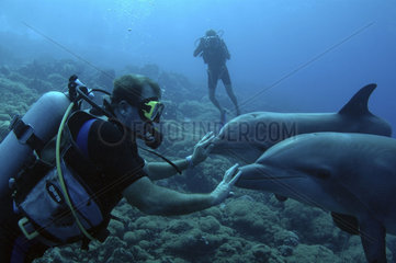 Netherlands Antilles  Curacao  open water dolphin dive