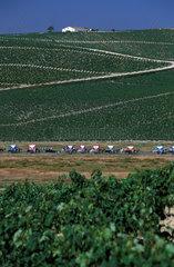 Jerez de la Frontera the local brotherhood crosses the sherry vineyards on its way to El Rocio