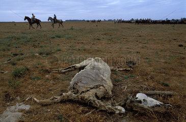 Almonte coto donana saca de yeguas the carcass of a dead horse
