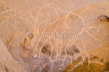 Rupestral engraving of elephant Tassili ajjer Sahara Algeria