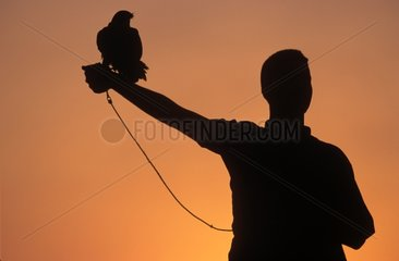 Silhouette of Falconer with his raptor