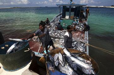 Maldives  off loading fish