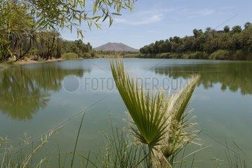 Oasis of Palm trees at the edge of the river San Ignacio