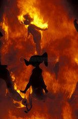 Valencia  the burning of the ninots during the Las Fallas festival