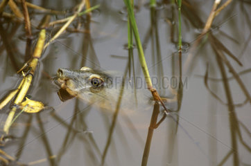 Wilpattu National Park  turtle
