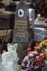 Stele commemorative of cat Cemetery of Asnière France