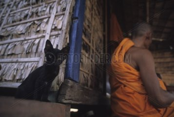 Black cat on a beam of house on pile Kampuchea